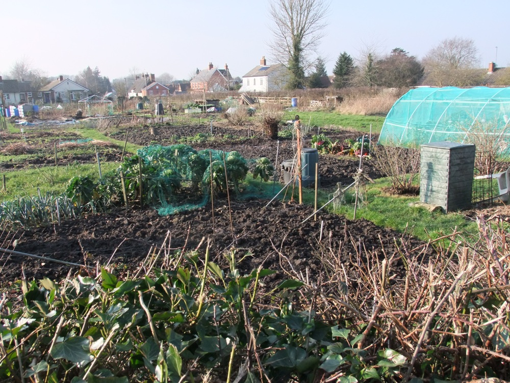 Picture of Urchfont Allotment site